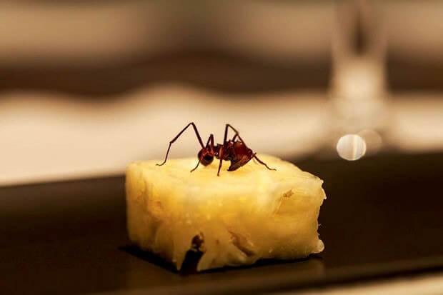 Ananas con formica amazzonica e formiche tostate: Migliori Ricette