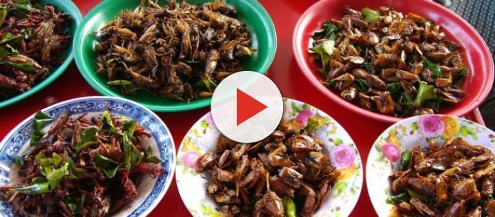 Risotto alle Blatte: Ricetta, come cucinarlo, dove mangiarlo