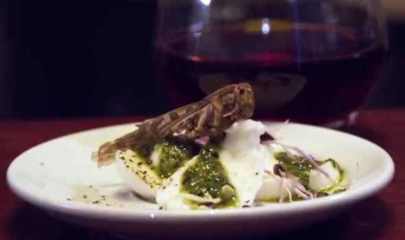 5 Migliori Ristoranti nel mondo dove mangiare insetti