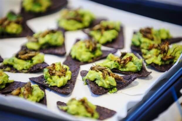 Piatti da Chef: insetti commestibili anche in cucine di alto livello