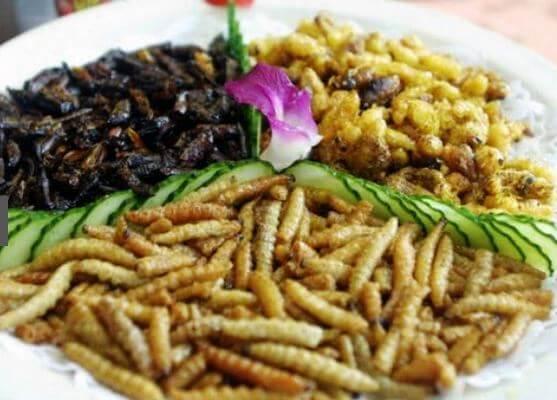 Dieta con insetti commestibili in Italia: funziona davvero?