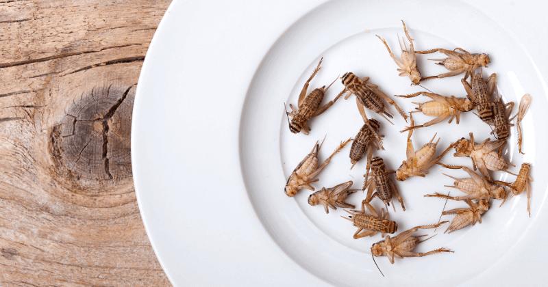 Insetti Commestibili: migliori piatti a base di Insetti e ricette