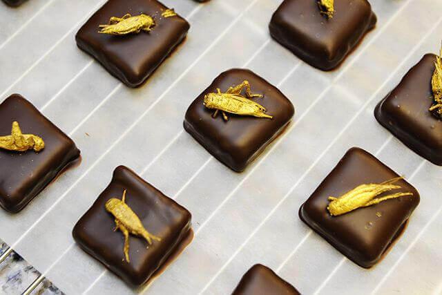 Migliori piatti a gusto di insetti commestibili: cavallette sul torrone e lecca lecca di locuste