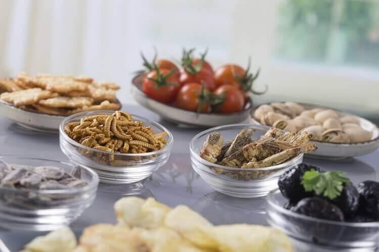 Piatti a base di insetti commestibili: bachi da seta, cavallette, larve